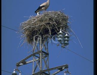 Cicogna, nido e traliccio