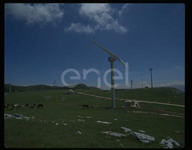 Campo eolico e cavalli